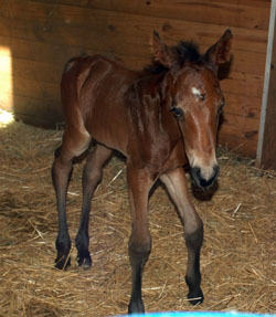 Filly still wobbly